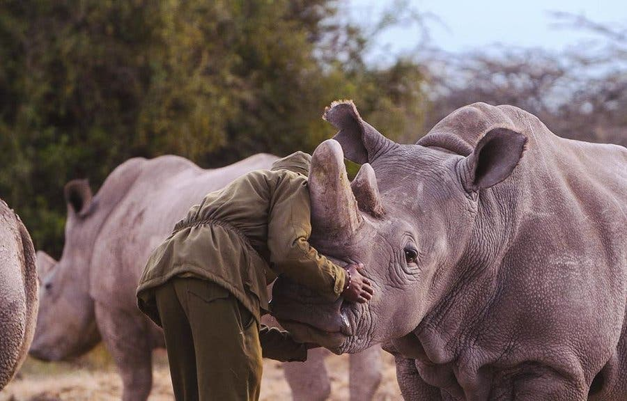 South African rhino poaching statistics