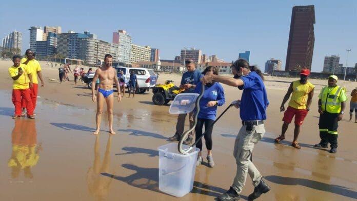 Black mamba rescued from Addington Beach Durban