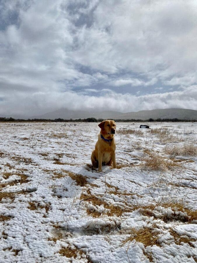dog in snow south africa