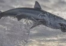 shark-breach-south-africa