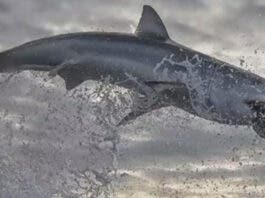 shark-breach-south-africa