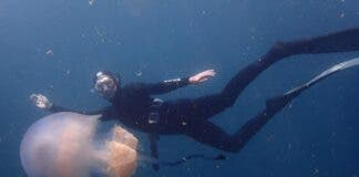 University of the Western Cape masters student Roxy Zunckel swims with the jellyfish Rhizostoma luteum. Supplied