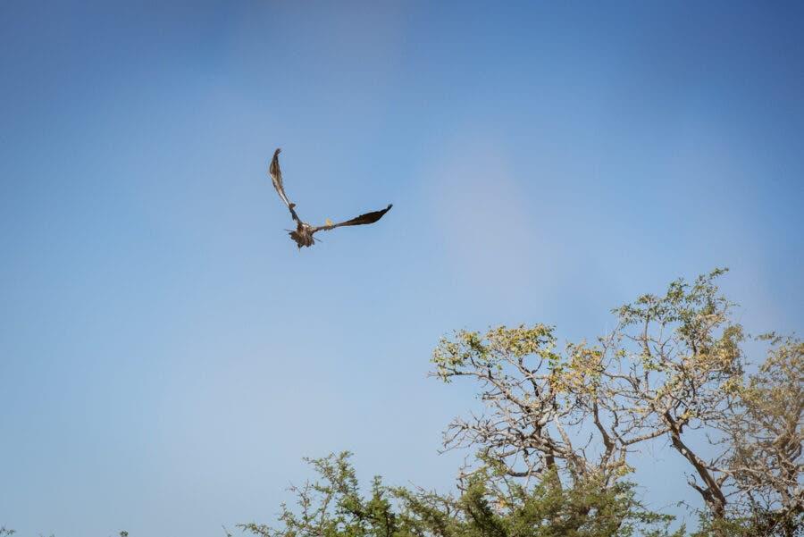 vulture monitoring