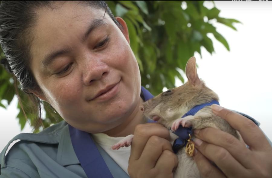 magawa herorat cambodia landmine detection