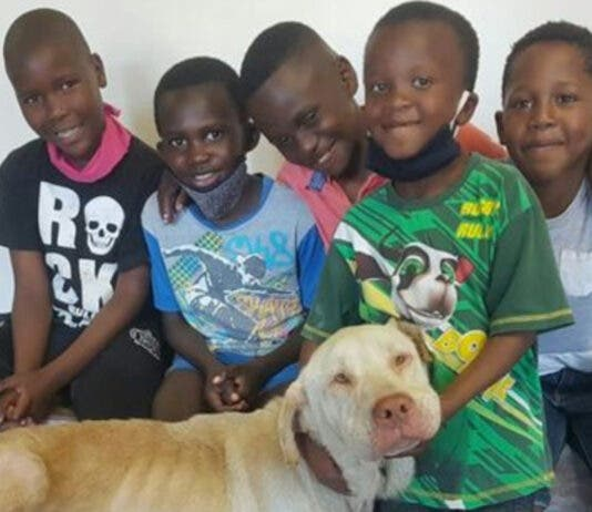 animal-welfare-magnificent-five-south-africa