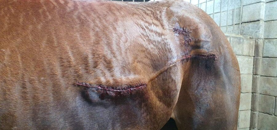 horse attacked fairview