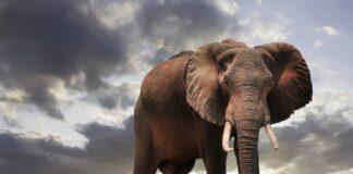mining banned zimbabwe park elephants pix