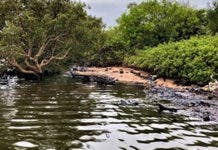 crude-oil-spill-durban