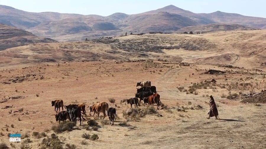 stock theft free state