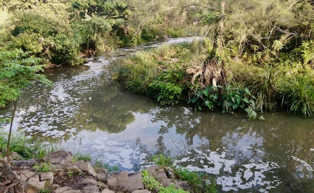 Greenpeace Africa and local organisations are calling for the restoration of the Umbilo River in Durban. Photo: Sandra Streak