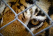 nelspruit zoo carte blanche