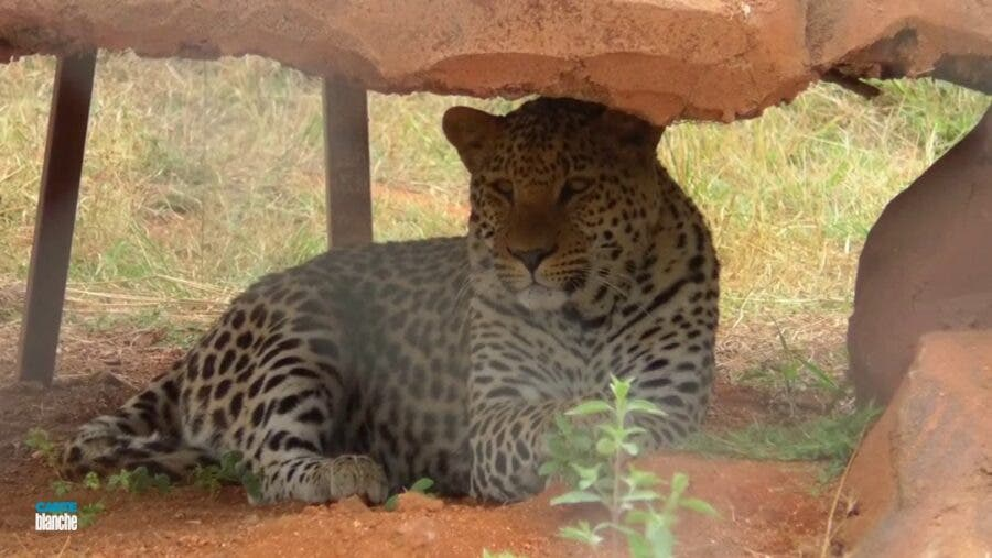 Zoo near Kruger in Mpumalanga, South Africa