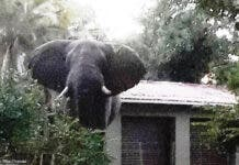 elephant garden south africa cape vidal kzn