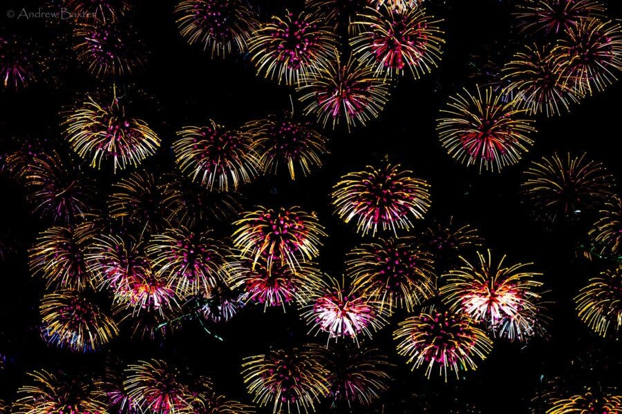 Protea flower photos like fireworks at Kirstenbosch South Africa