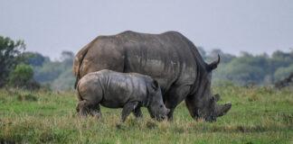 rhino-poaching-kzn
