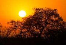 kruger national park sunrise. missing field ranger