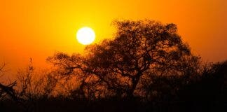 kruger national park sunrise. missing field ranger
