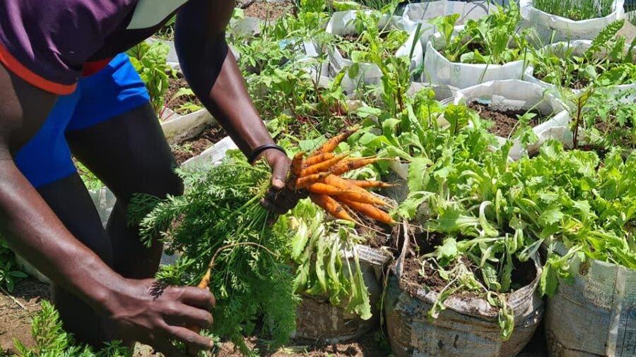 vegetable garden durban