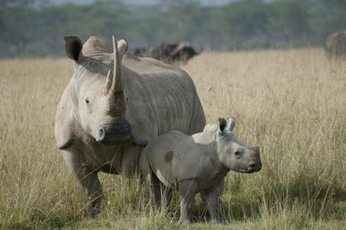 Police launch manhunt for rhino poaching suspects