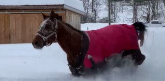 horse-playing-snow-new-york-state