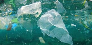 plastic items that most kill whales, dolphins, turtles and seabirds