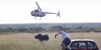 rhino-dehorning-south-africa