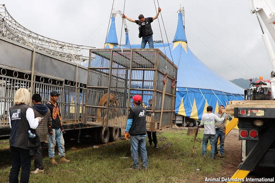 animals rescued from circus