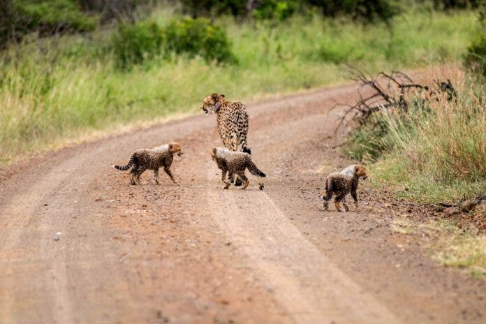 wildlife act