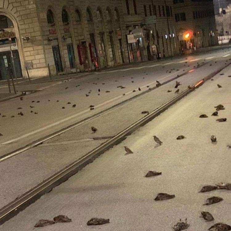 birds die rome fireworks
