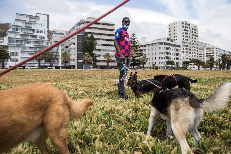 dog walker cape town