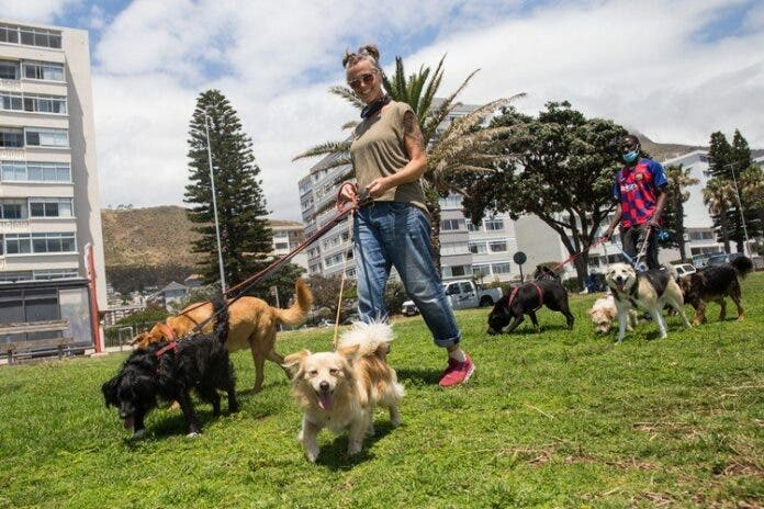 dog walkers cape town gup
