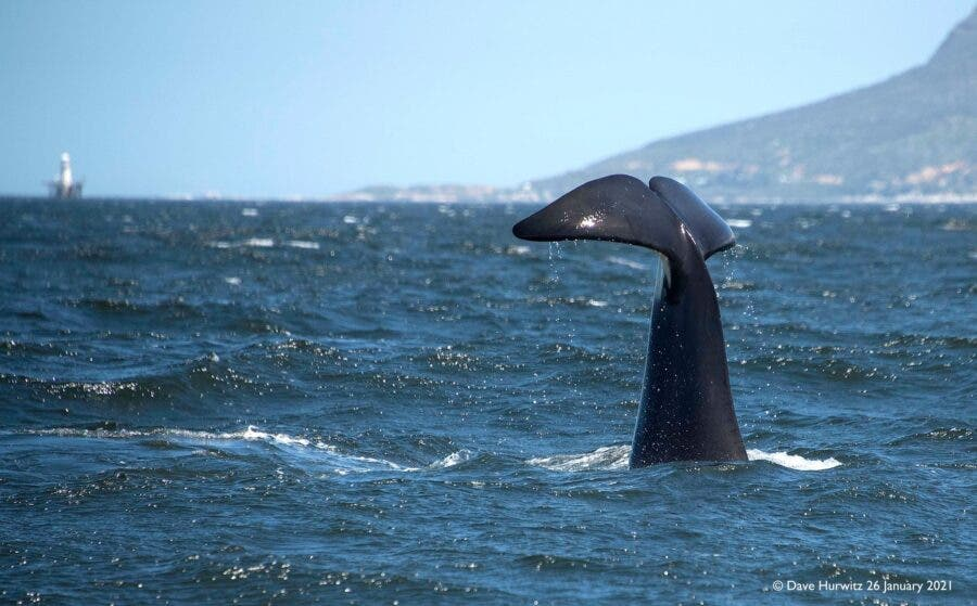 Killer Whale vocalisation recording South Africa