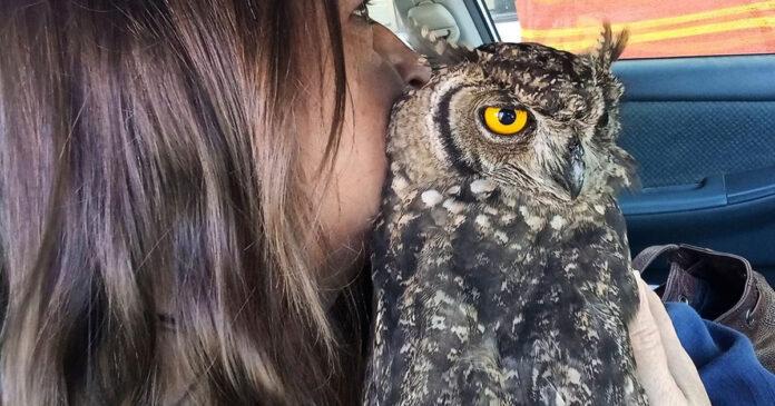 owl-rescue-oudtshoorn