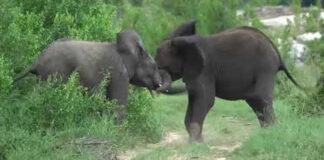 safari-guide-new-year-video-message