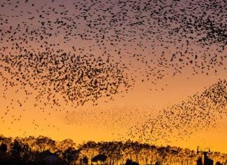 Fireworks Blamed for Killing Hundreds of Birds in Rome