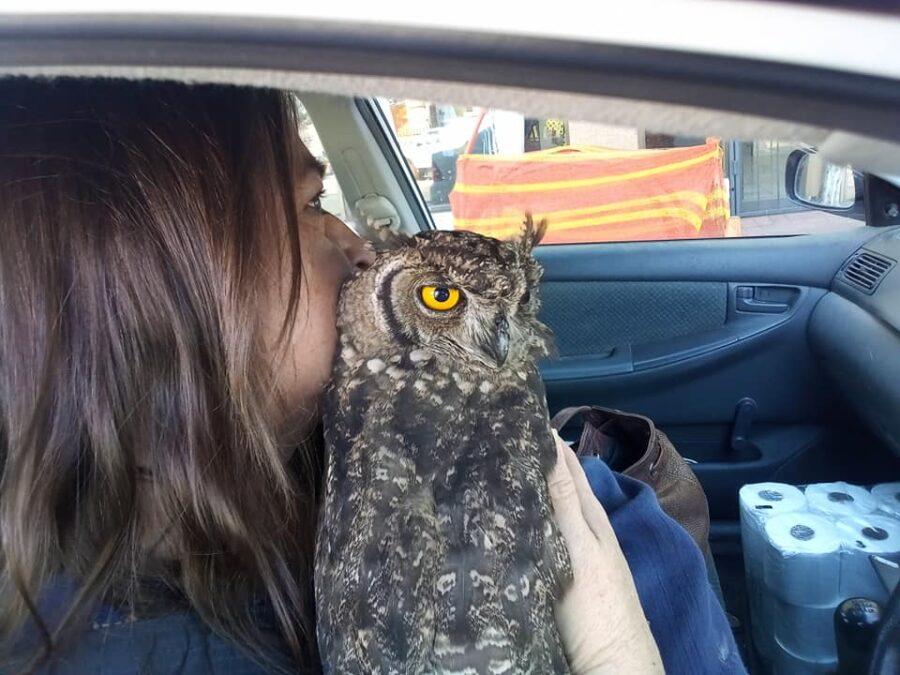 Owl rescue Oudtshoorn