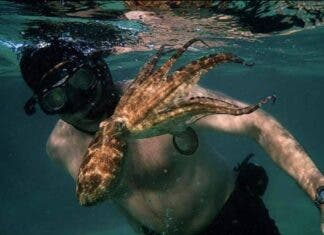 My Octopus Teacher Oscars shortlist