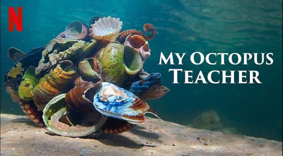 My Octopus Teacher Netflix Oscars