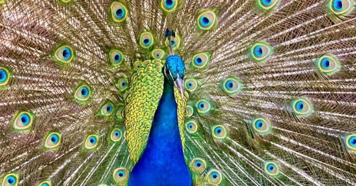 world of birds south africa