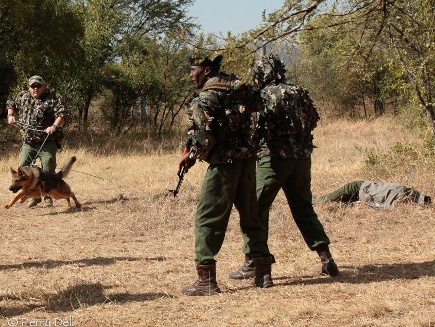 lion attack pilanesberg ranger 2