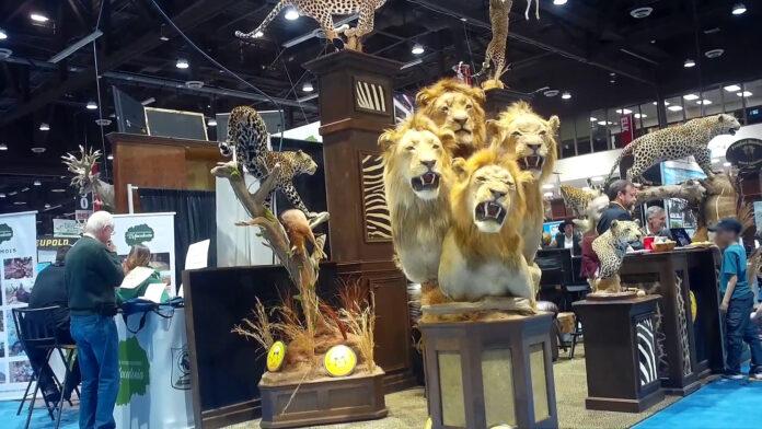 A four-lion taxidermy at the Safari Club International's 2020 annual convention in Reno, Nevada.
