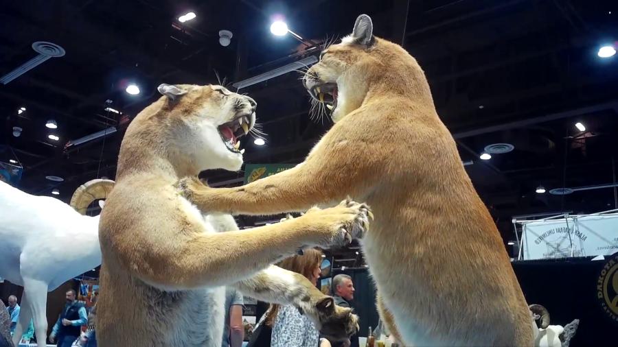 Safari Club International's annual convention in Reno, Nevada.