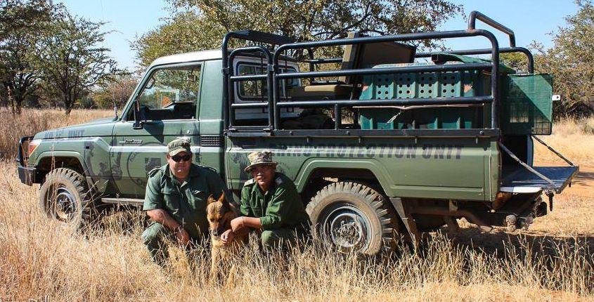pilanesberg ranger lion attack
