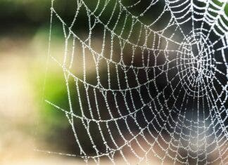rain spider Swellendam SPCA