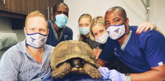 vet 3d-printer-tortoise-jaw