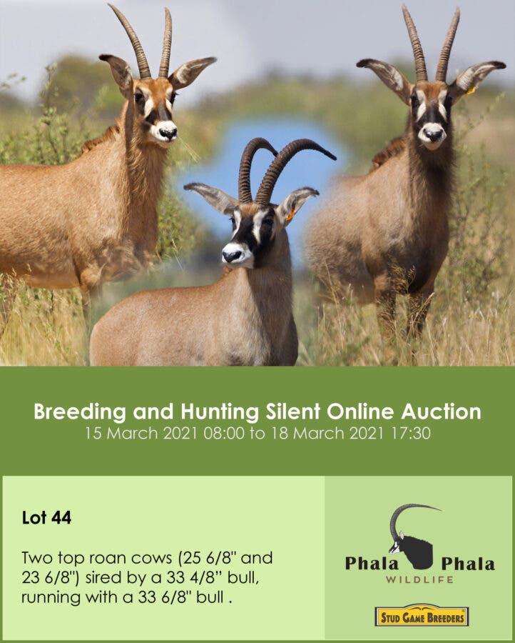 Breeding and hunting Phala Phala