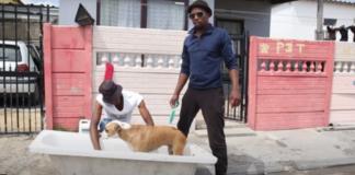 dog-washing business in khayelitsha