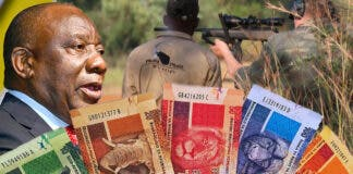 PETA: Ramaphosa Issues More Denials of His Trophy-Hunting Businesses