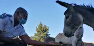 Donkey skin trade South Africa