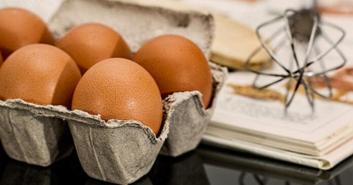 Bela-Bela Egg Farm Tells an Excellent Story of Land Claim Success